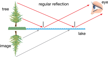 lesson 3a ray diagram shows a regular, specular reflection from a smooth, flat surface